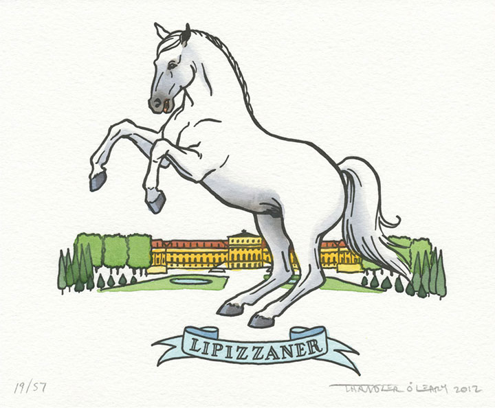 Lipizzaner horse illustrated and letterpress printed by Chandler O'Leary