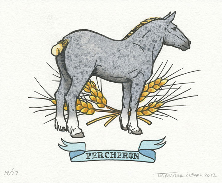 Percheron horse illustrated and letterpress printed by Chandler O'Leary