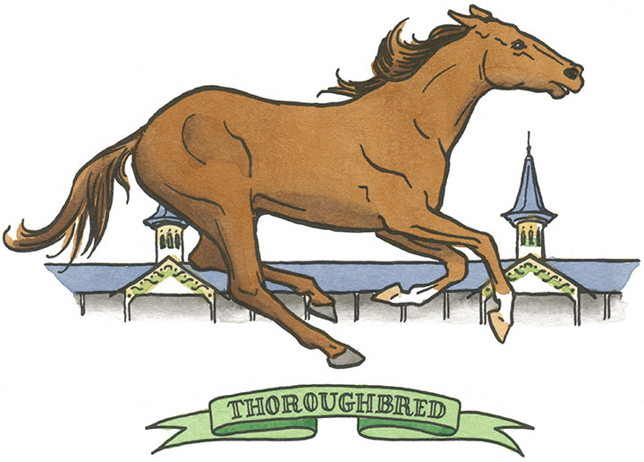 Thoroughbred horse illustration by Chandler O'Leary