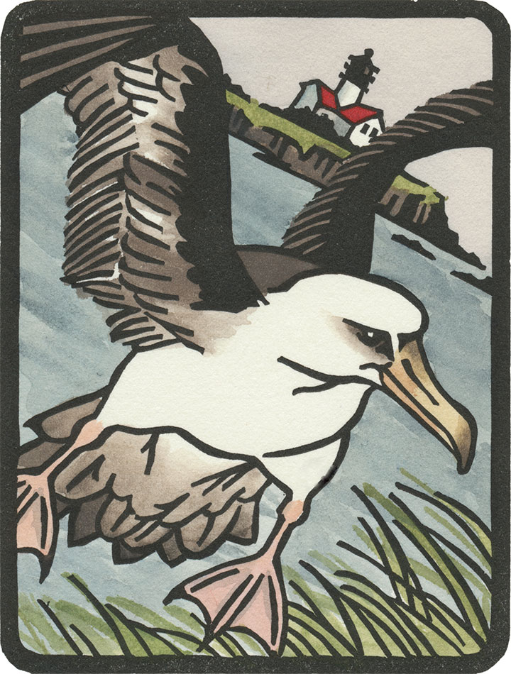 Laysan albatross illustration by Chandler O'Leary