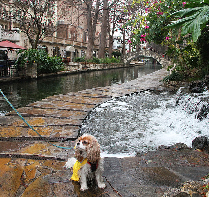 San Antonio Riverwalk photo by Chandler O'Leary