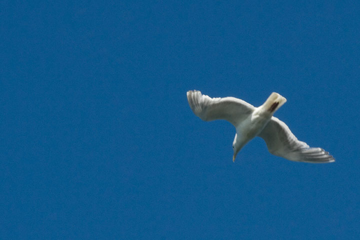 Gull photo by Chandler O'Leary