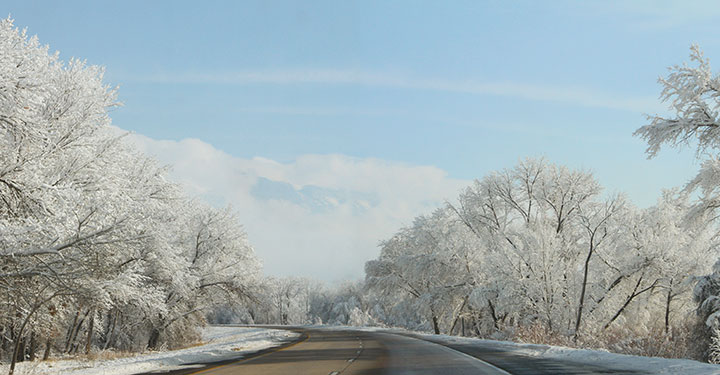 Snowy trees photo by Chandler O'Leary