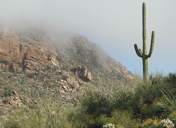 Saguaro National Park photo by Chandler O'Leary