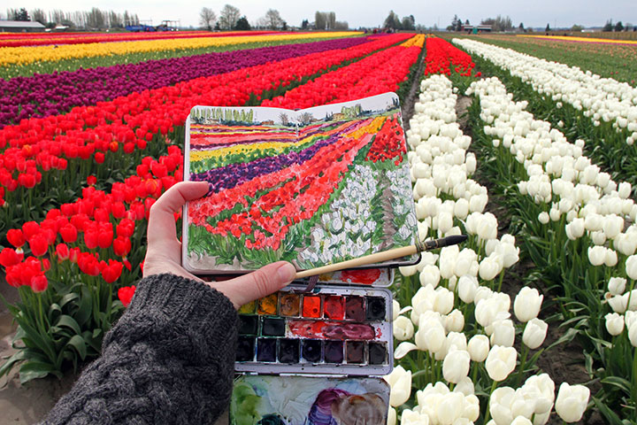Skagit Valley tulips photo and sketch by Chandler O'Leary