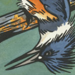 Detail of Belted Kingfisher card by Chandler O'Leary