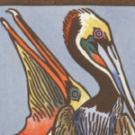 Detail of Brown Pelican card by Chandler O'Leary