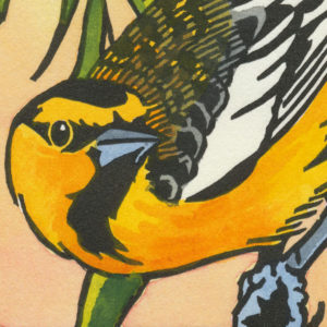 Detail of Bullock's Oriole card by Chandler O'Leary