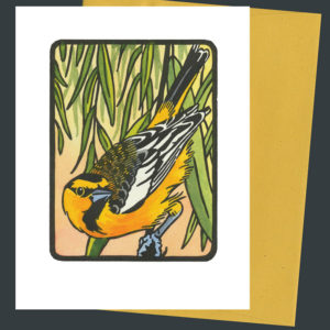 Bullock's Oriole card by Chandler O'Leary