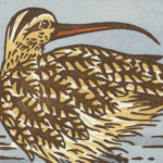 Detail of Long-billed Curlew card by Chandler O'Leary