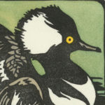 Detail of Hooded Merganser card by Chandler O'Leary