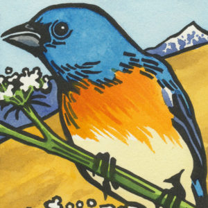 Detail of Lazuli Bunting card by Chandler O'Leary