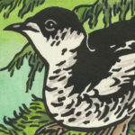 Detail of Marbled Murrelet card by Chandler O'Leary