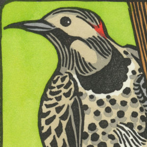 Detail of Northern Flicker card by Chandler O'Leary
