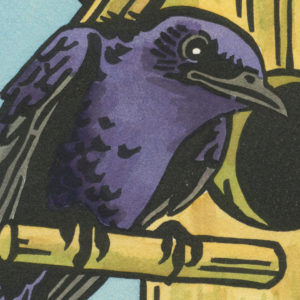 Detail of Purple Martin card by Chandler O'Leary