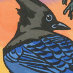 Detail of Steller's Jay card by Chandler O'Leary