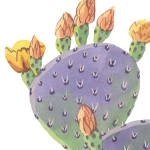 Purple Prickly Pear print by Chandler O'Leary