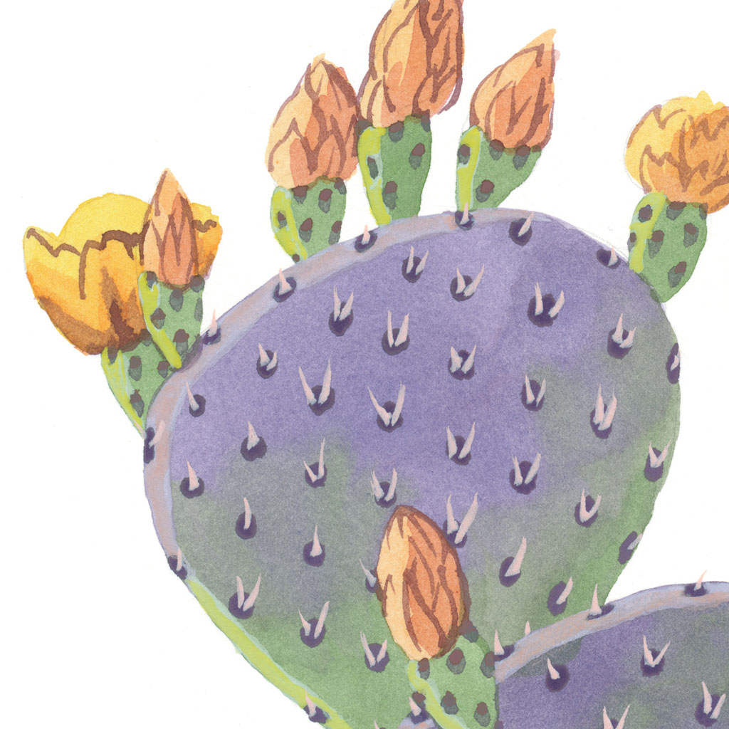 purple prickly pear print chandler o leary