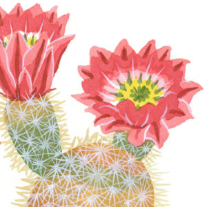 Rainbow Cactus print by Chandler O'Leary